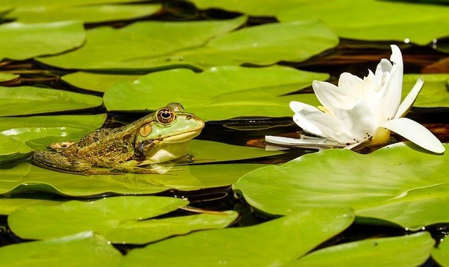Why is there no Wildlife in my Pond? | 5 Reasons Why