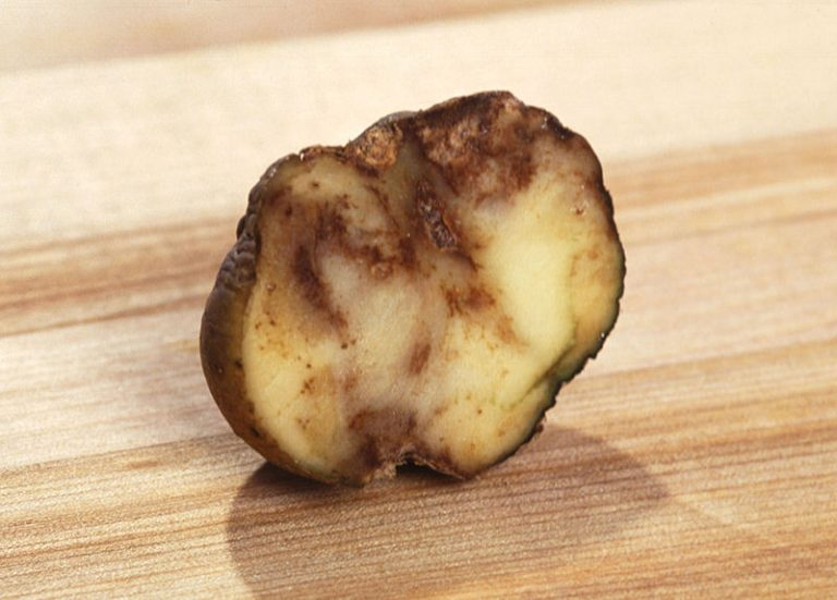 What Does Blight Look Like on Potatoes? | How to Avoid Potato Blight