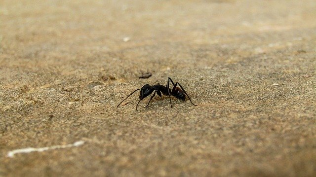Ants in Compost Bin | Is it Good or Bad?