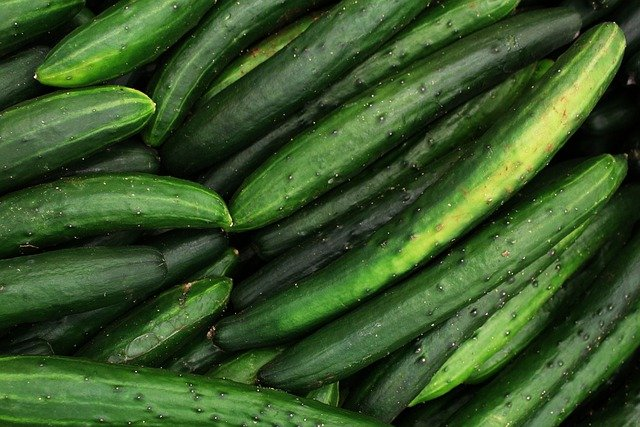 Baby Cucumbers Dying On The Vine? | Solved!
