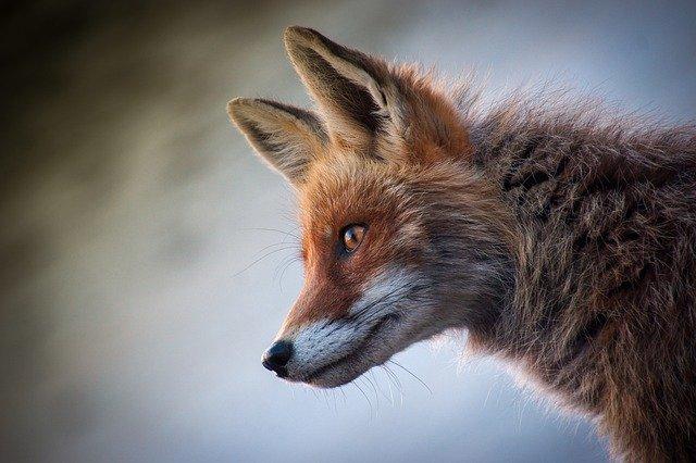 4 Best Ways to Stop Foxes from Digging in Your Garden