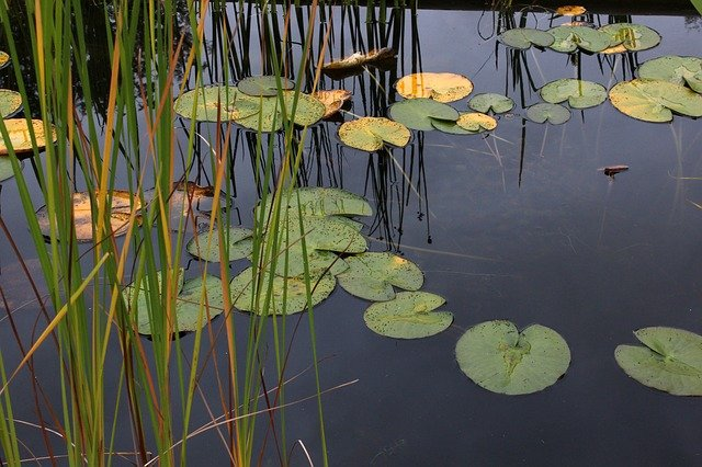Is Stagnant Water Bad for Plants? | What to Do if Water is Stagnant