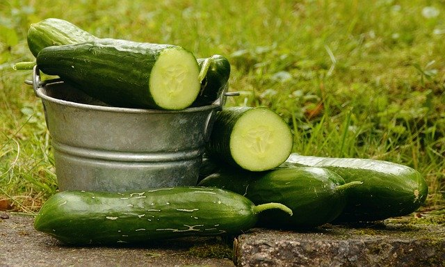 Growing Cucumbers In A Greenhouse Problems & How to Fix
