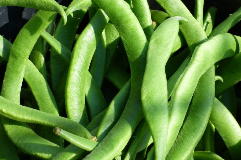How To Freeze Runner Beans Fresh From The Garden