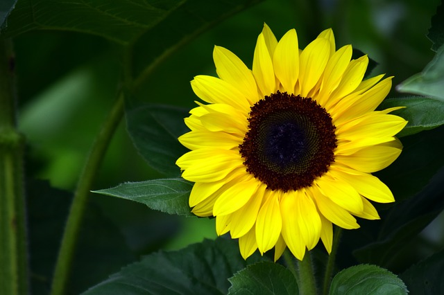 How To Grow The Smallest Sunflower In The World