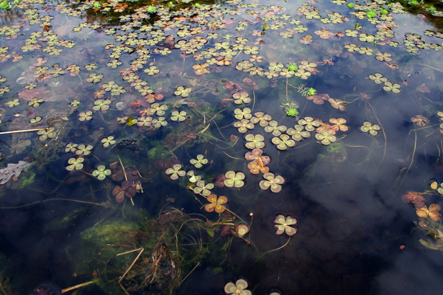 When Is The Best Time To Clean Out A Pond?