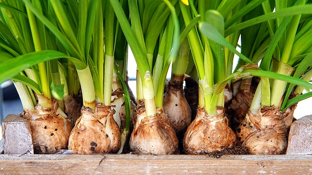 What Are Flower Bulbs? | Nature's Battery Cell