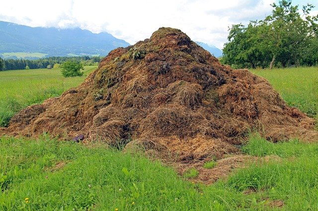 17 Frequently Asked Questions About Compost