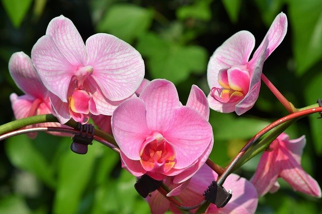 22 Frequently Asked Questions About Orchids