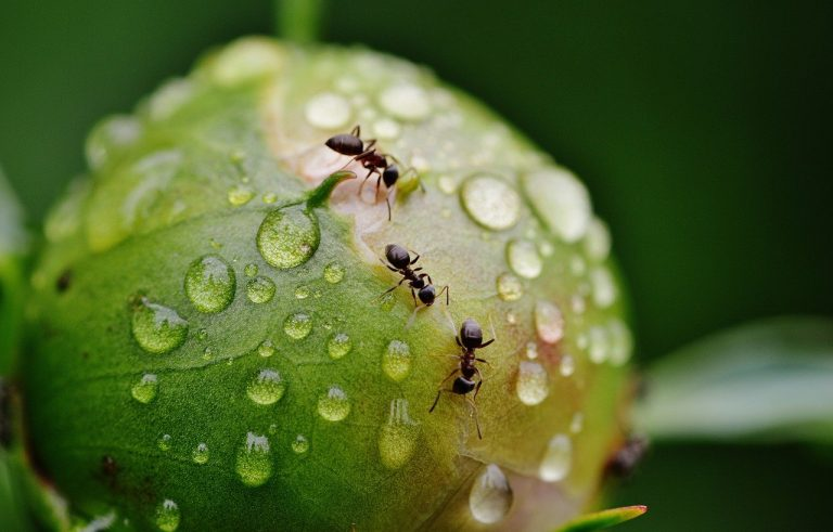 Why Are Ants Attracted to Dog Urine?