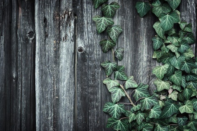 How to Remove Stubborn Ivy Roots | A Gardener's Guide